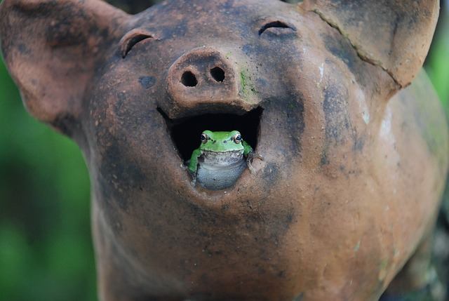 an image of a frog peeking out of the mouth of a statue of a smiling pig
