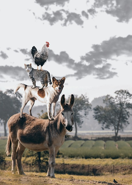 A chicken stands on a cat which stands on a dog which stands on a donkey