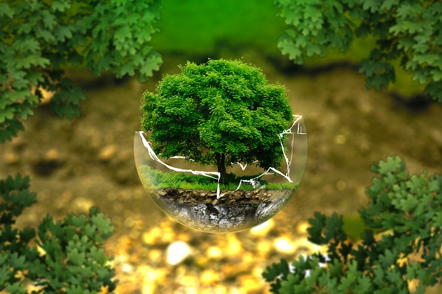 An image of a tree growing and thriving in a broken glass bubble.