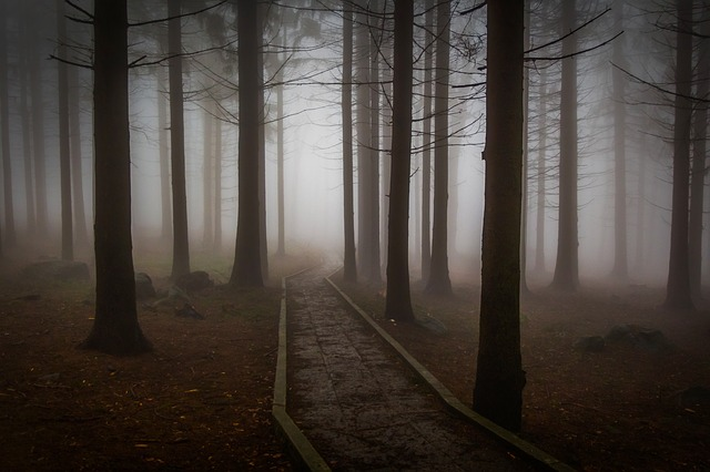 An image of a misty forest.