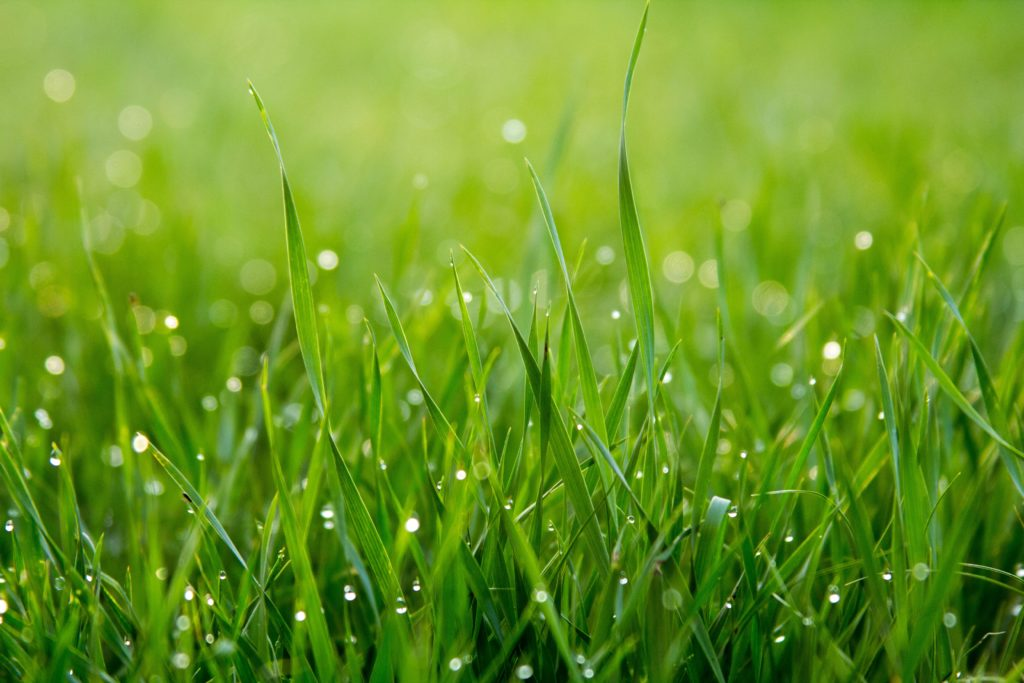 An image of a close-up of water droplets on green grass.