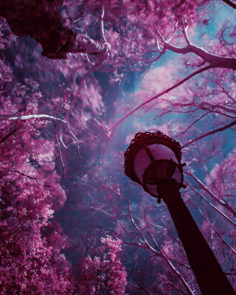 An image of a purple flowering trees and a lamp post against a deep blue sky.