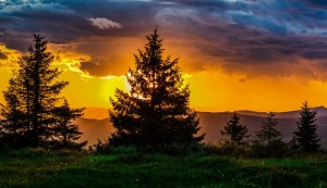 Sunset over the mountains through evergreen trees