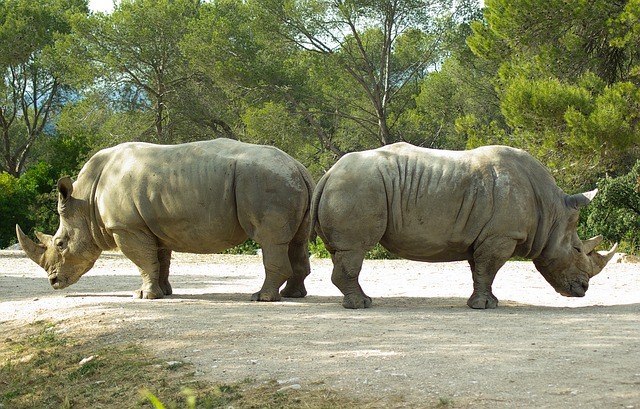 Rhinos facing in opposite directions.