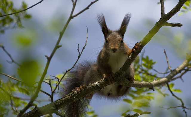 close-up of a squirrel in a tree