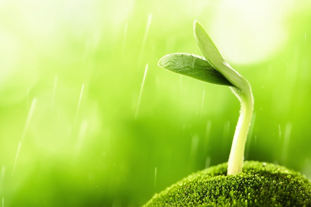 a seedling grows out of moss and is fed by the rain