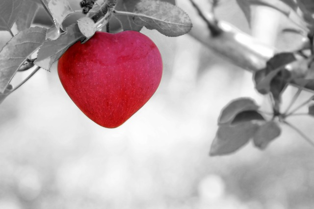 a red apple grows in a heart shape