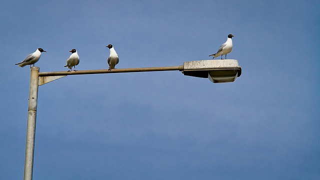 Three birds are clustered together on the long arm of a lamp post, leaving one bird on its own at the very end.