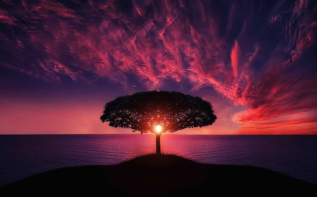 An image of a tree in silhouette in front of a still body of water and a pink and purple sunrise.