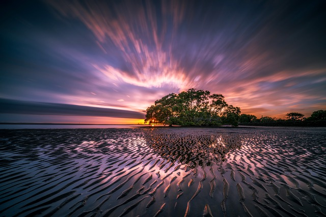 An image of a morning sky at the shore, with a tree in the middle of the sky and then the sky reflected in shallow water.