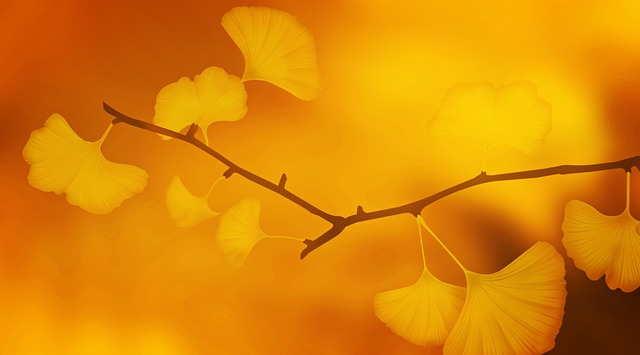 An image of a branch of a gingko tree, shot with golden light, with only a handful of yellow fan-shaped leaves visible.