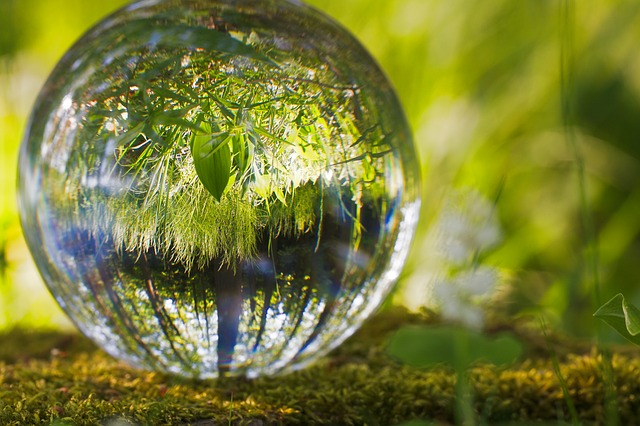 An image of a glass sphere reflecting the greenery surrounding it.