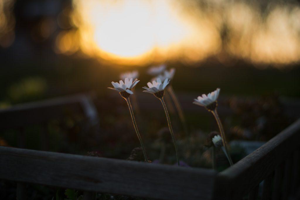 White flower seedings reach for the light.